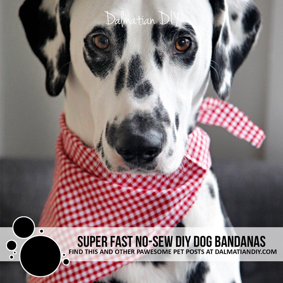 Super fast no-sew DIY dog bandanas