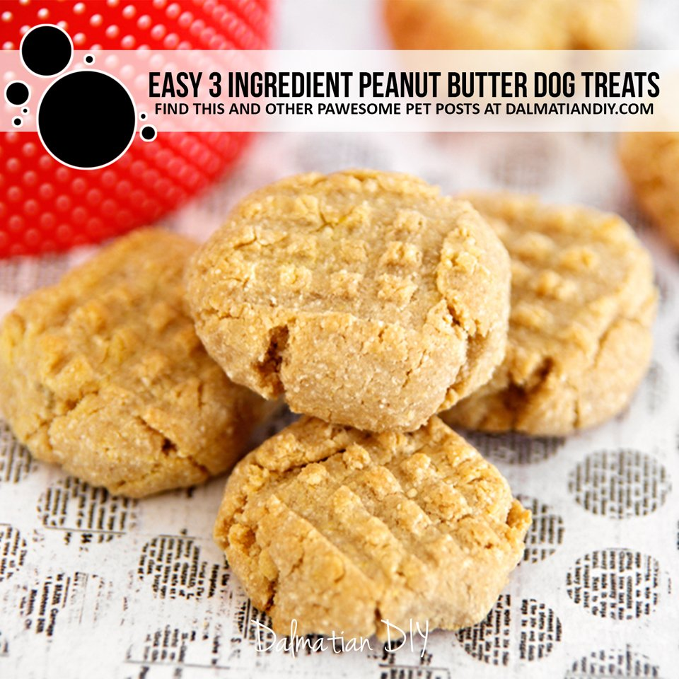 Easy three ingredient peanut butter dog treat recipe