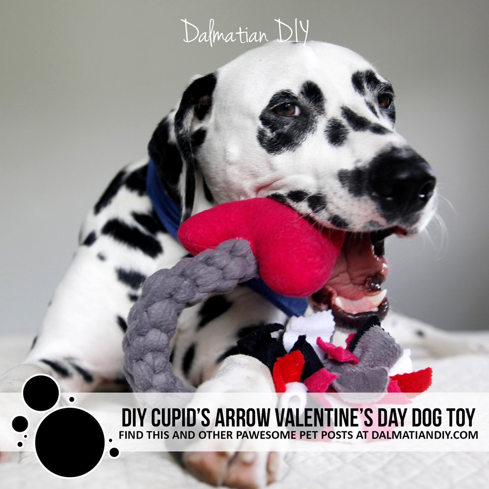 DIY Valentine's Day tug and squeaker Cupid's arrow dog toy