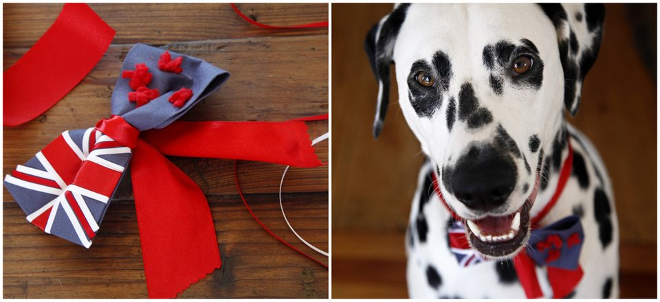 DIY no-sew New Zealand flag dog bow tie