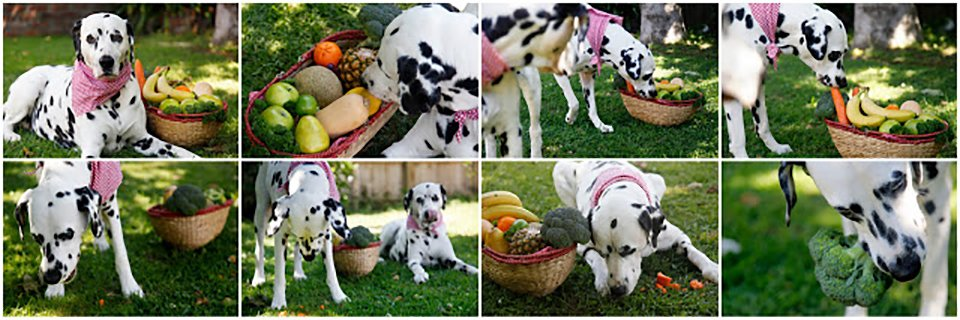 Dalmatian dogs raiding a harvest basket full of fresh fruits and vegetables