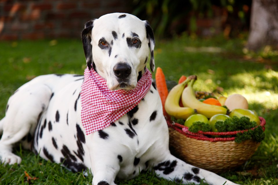 Dog-friendly fruits, vegetables, and herbs