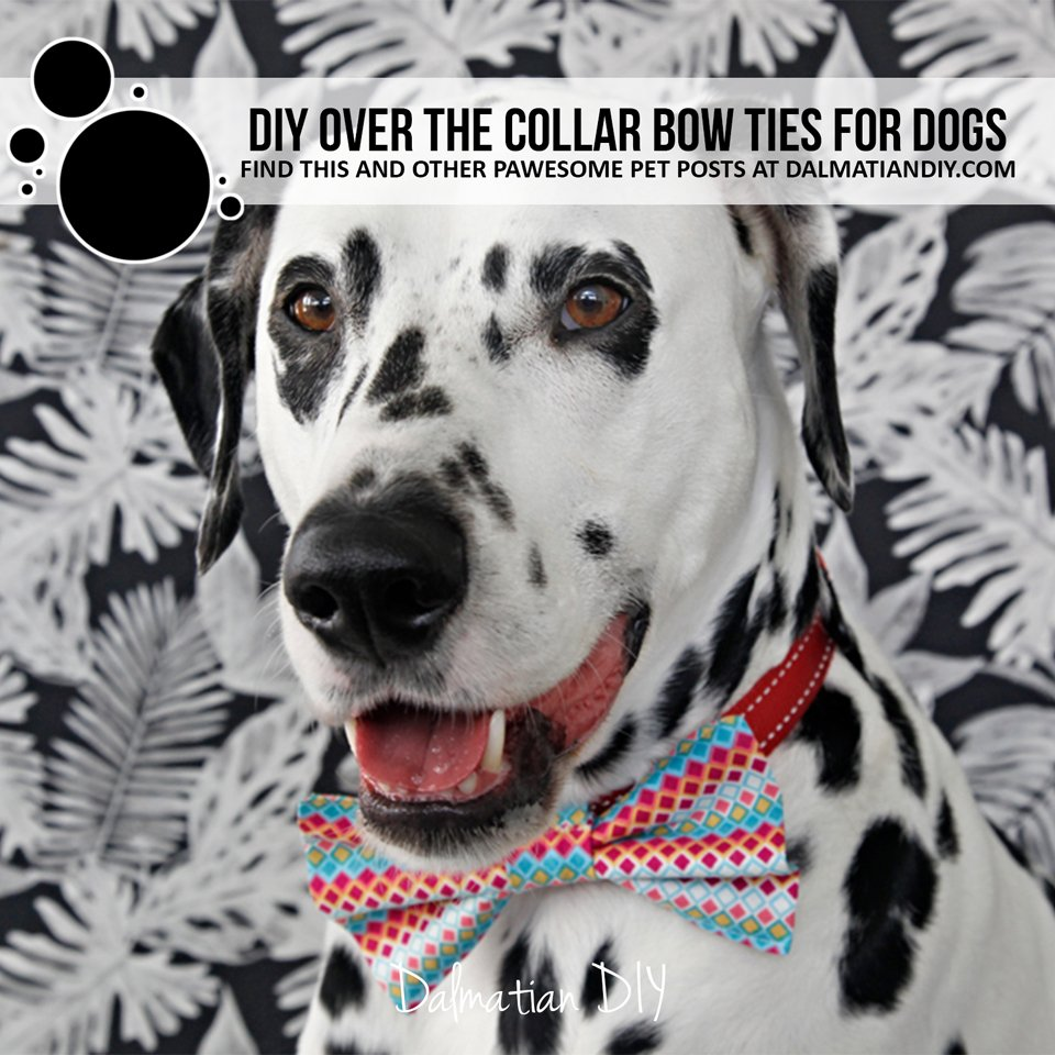 DIY dog collar bow ties and attachments