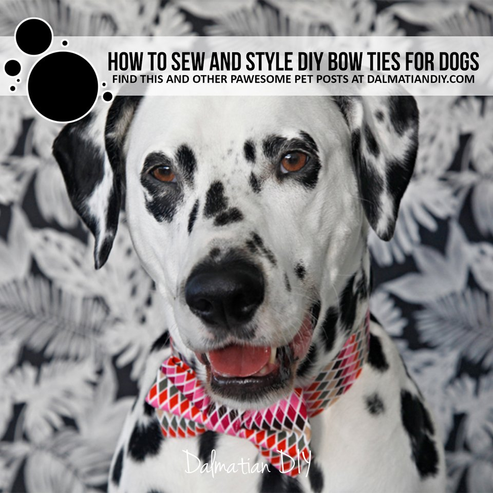 DIY fancy dress dog bow ties and collars