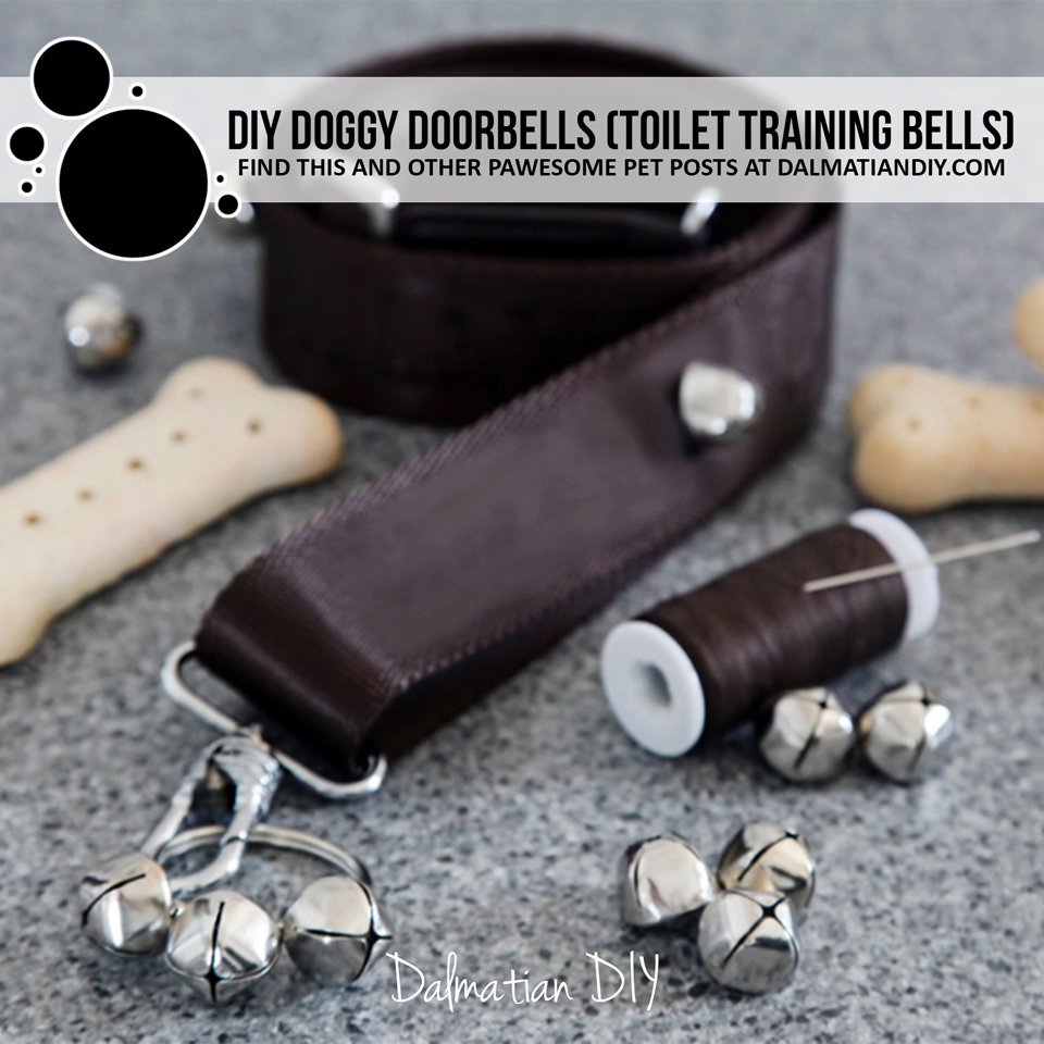 DIY doggy doorbells for puppy toilet training