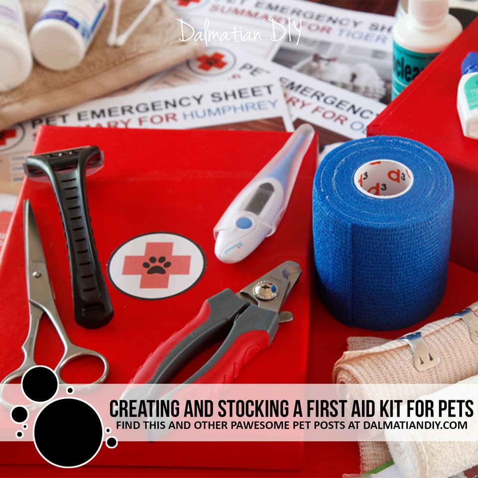 Creating and stocking a first aid kit for pets