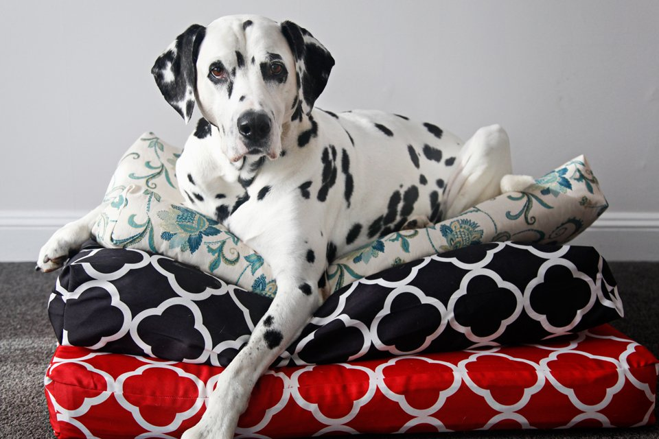 Dalmatian dog resting on a stack of homemade dog beds