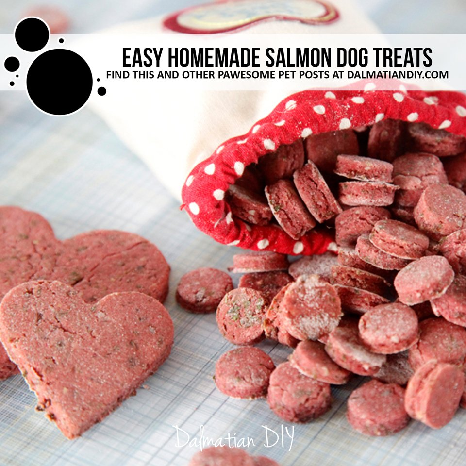 Easy homemade salmon dog treat recipe