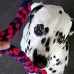 DIy woven fleece spiral dog tug toys