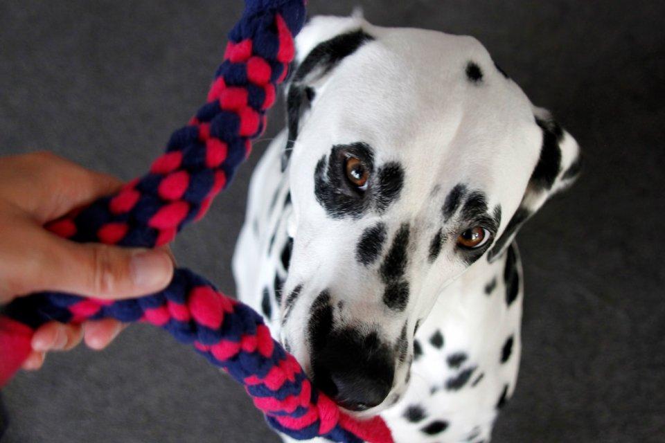 DIy woven fleece spiral dog tug toys