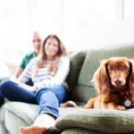 Pet-friendly homes (guest post and images via Modernize)