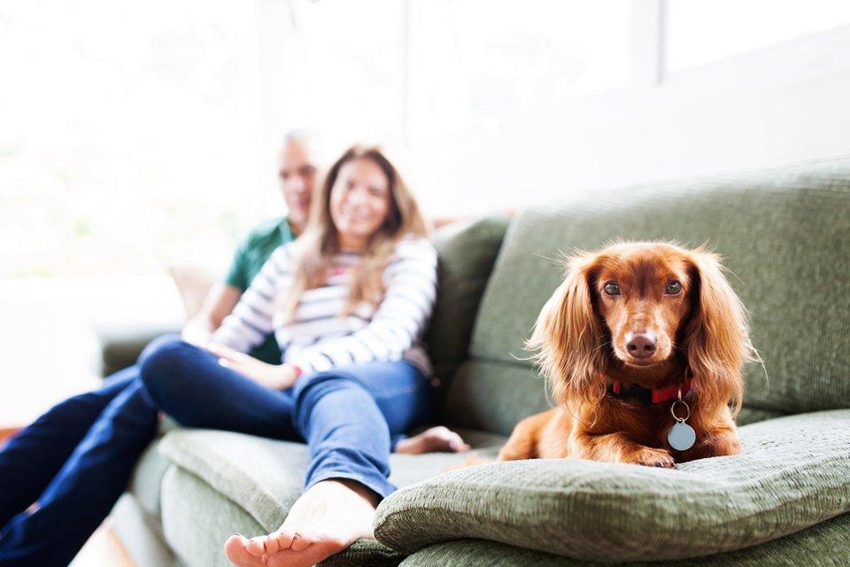 Pet-friendly homes (guest post and images via Modernize)