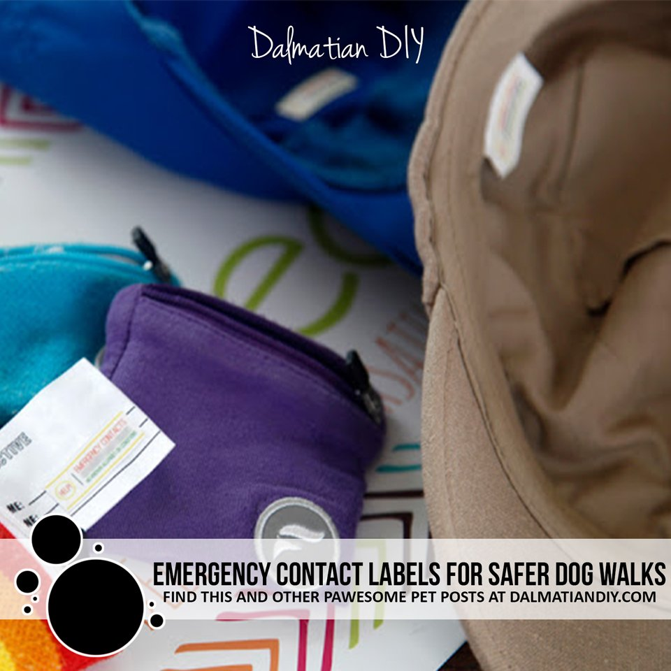 Carrying emergency contacts for safer dog walks