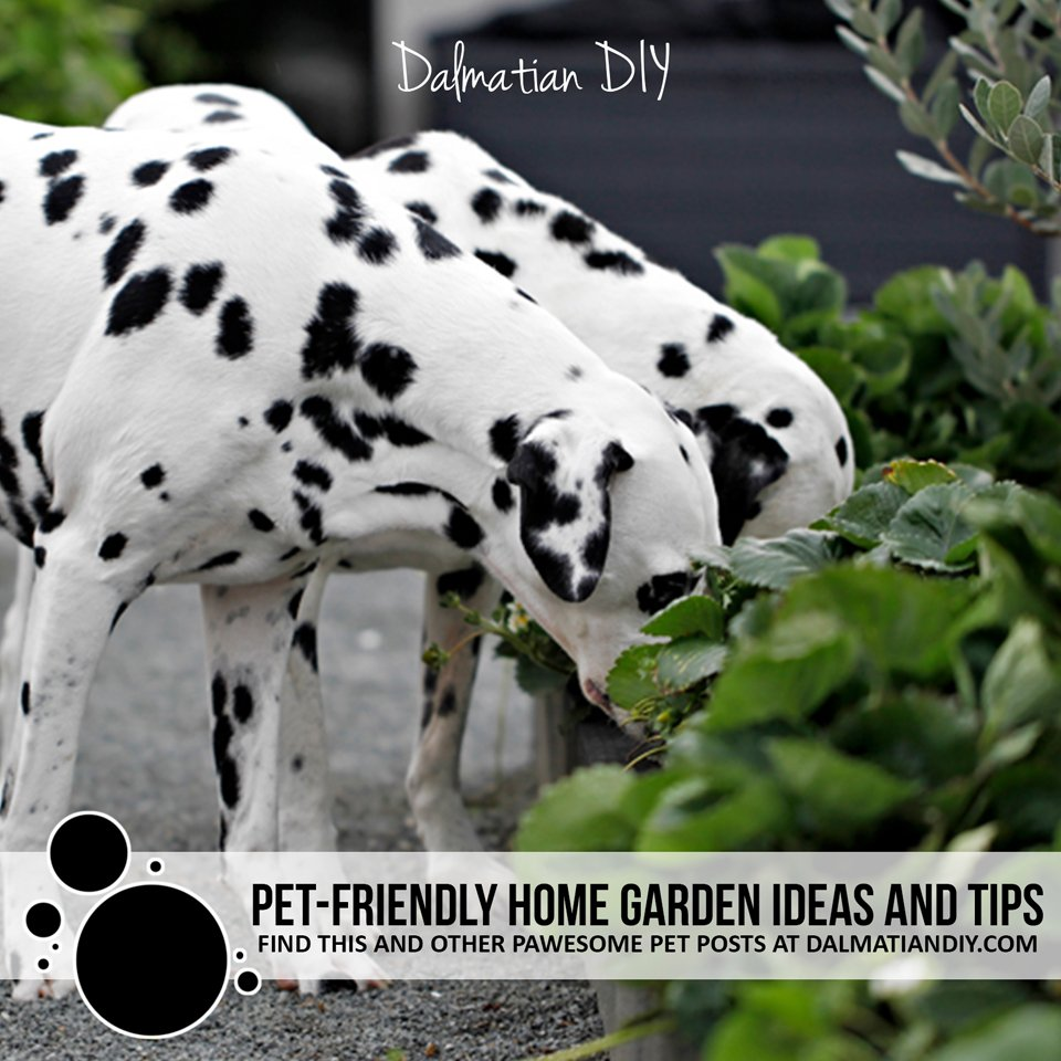 Creating and sharing a pet-friendly home garden