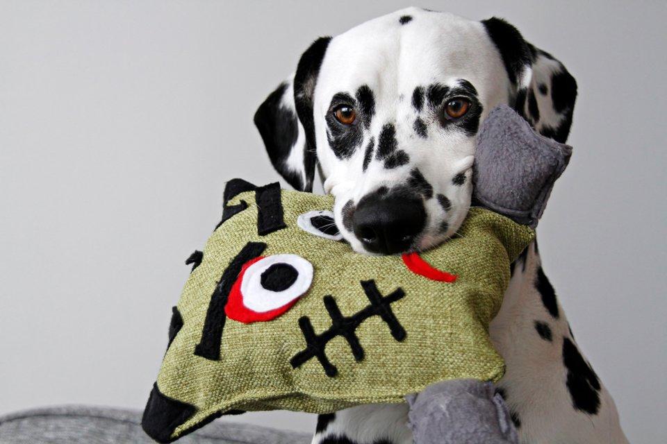 DIY Halloween Frankenstein stuffed DIY dog toy with squeakers