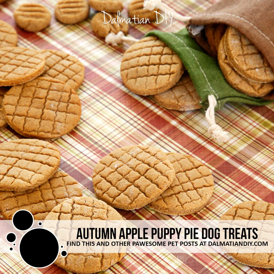 Homemade autumn apple pie baked biscuit dog treat recipe