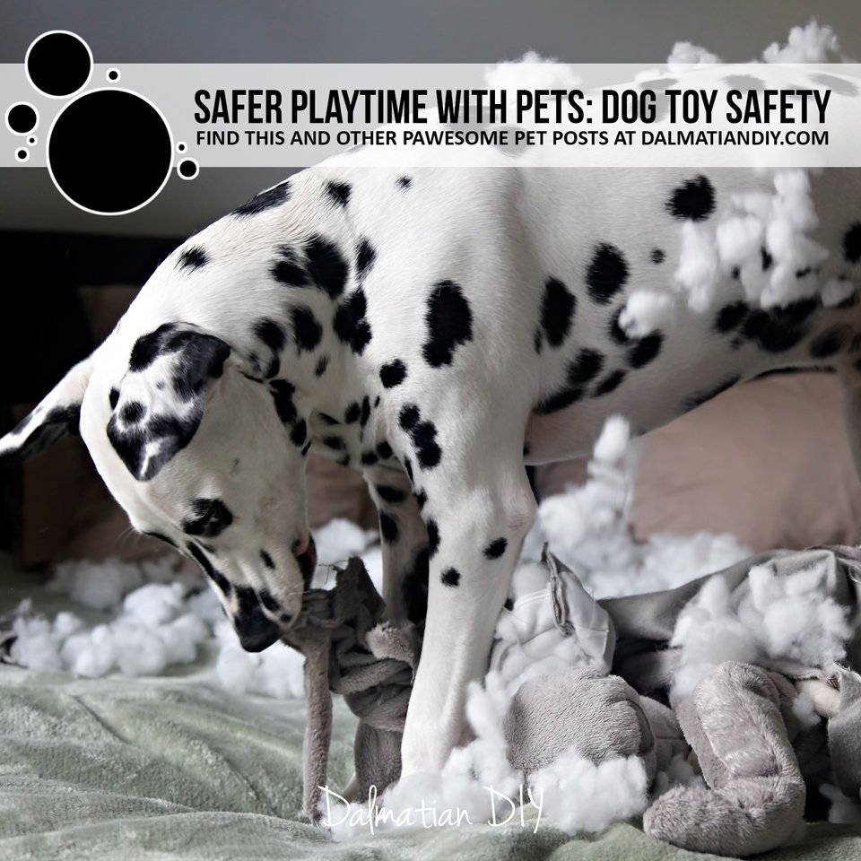 Safer playtime with pets: dog toy safety tips and links