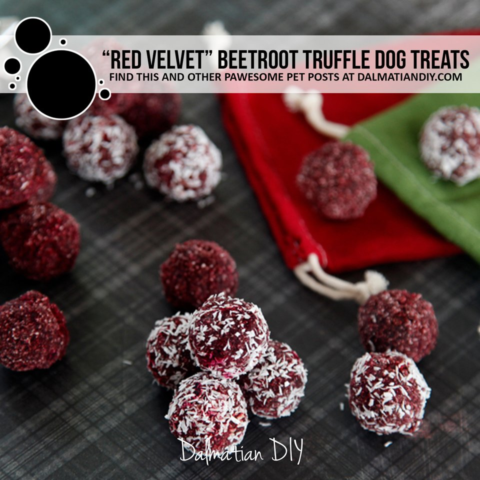 Red velvet beetroot truffle dog treat recipe with carob and peanut butter