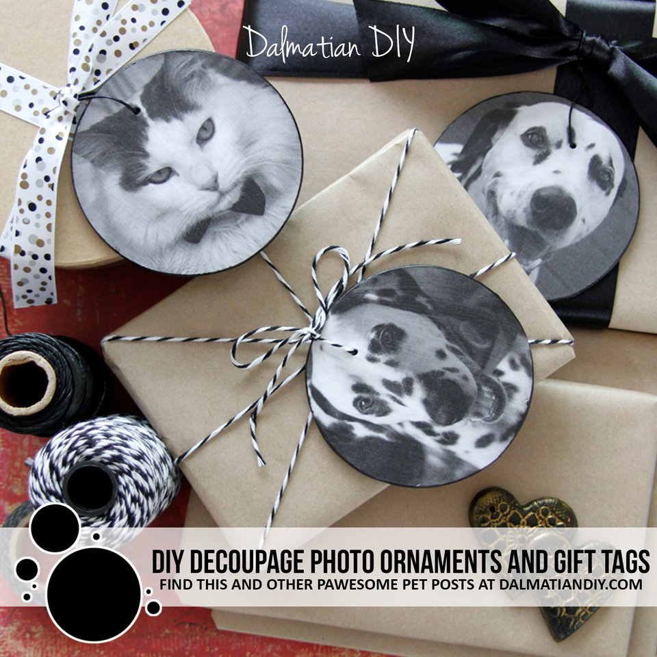 DIY pet photo ornaments and gift tags