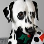 DIY round squeaky stuffed Frosty the Snowman dog toy