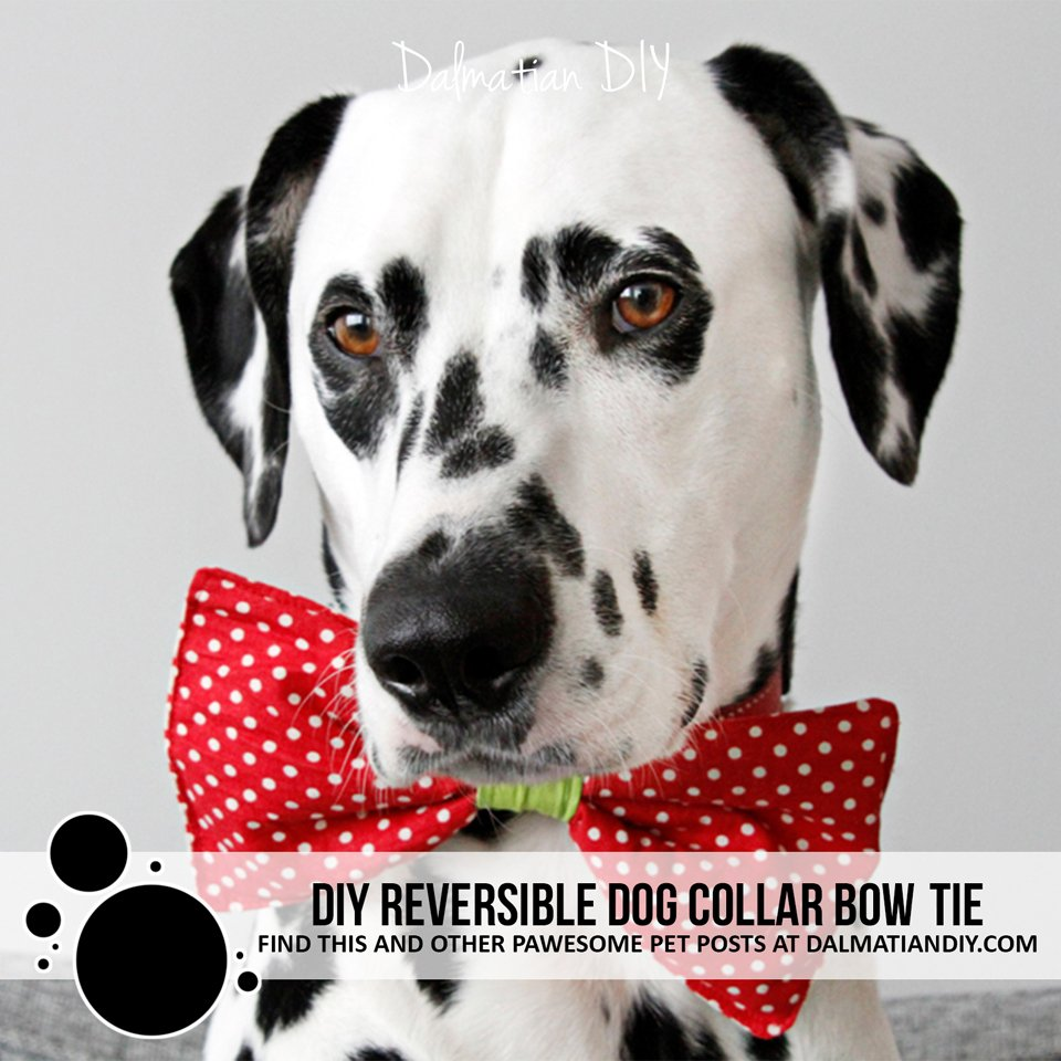 DIY reversible novelty dog collar bow tie