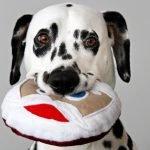 DIY round squeaky stuffed Santa dog toy