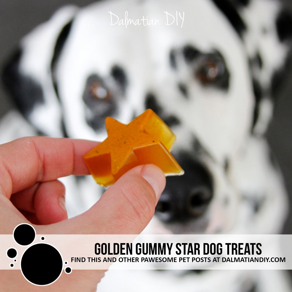 Golden gummy star dog treat recipe with turmeric