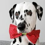 DIY reversible dog collar bow tie