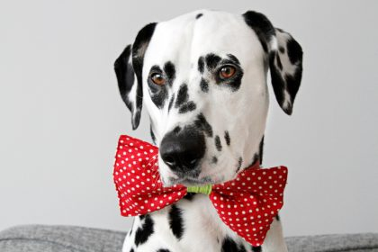 DIY reversible dog collar bow tie