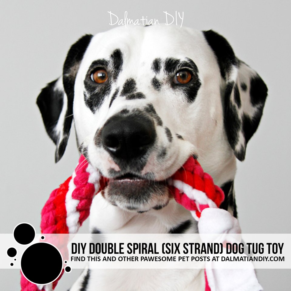 DIY twisted double spiral six strand fleece dog tug toy