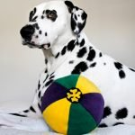 Mardi Gras DIY multi-coloured stuffed ball dog toy