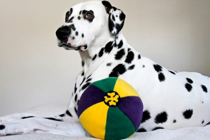 Mardi Gras DIY multi-coloured stuffed ball dog toy