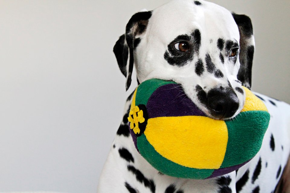 Mardi Gras DIY multi-coloured stuffed ball dog toy with squeakers