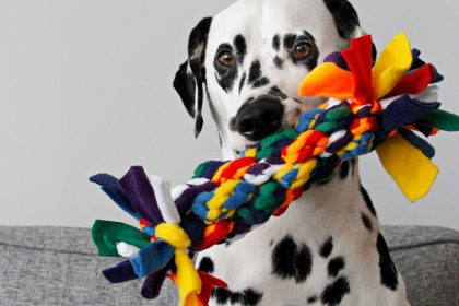 Giant DIY fleece dog tug toy made out of smaller tug toys