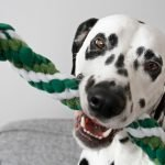 DIY St. Patrick's Day dog tug toys