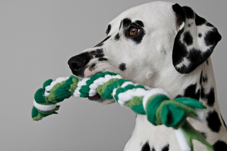 DIY St. Patrick's Day twisted double spiral dog tug toy