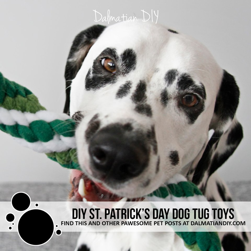 DIY St. Patrick's Day dog tug toys