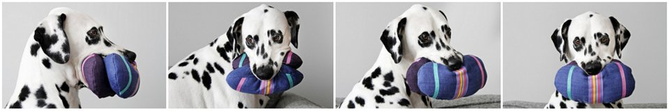 Dalmatian dog playing with homemade Easter egg dog toys