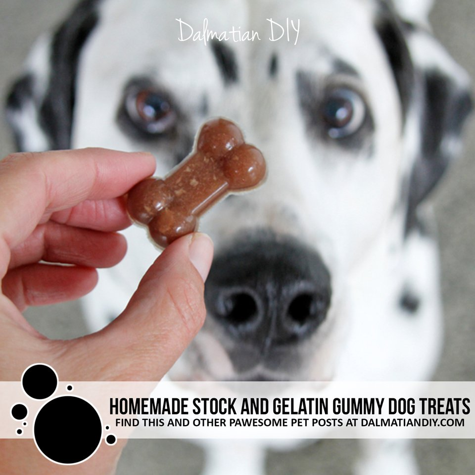 Homemade stock and gelatin gummy dog treat recipe