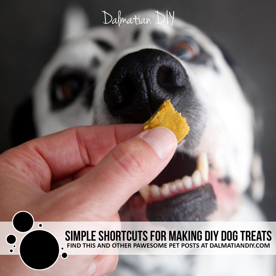 Quick easy shortcuts to cut and bake homemade dog treats