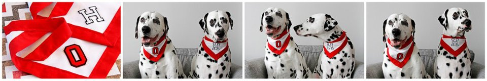 Dalmatian dogs wearing monogrammed red and white bandanas