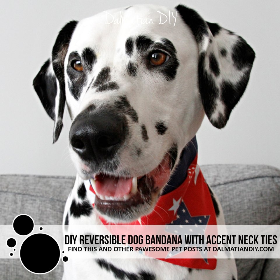 DIY Reversible Dog Bandana with Accent Trim Neck Ties