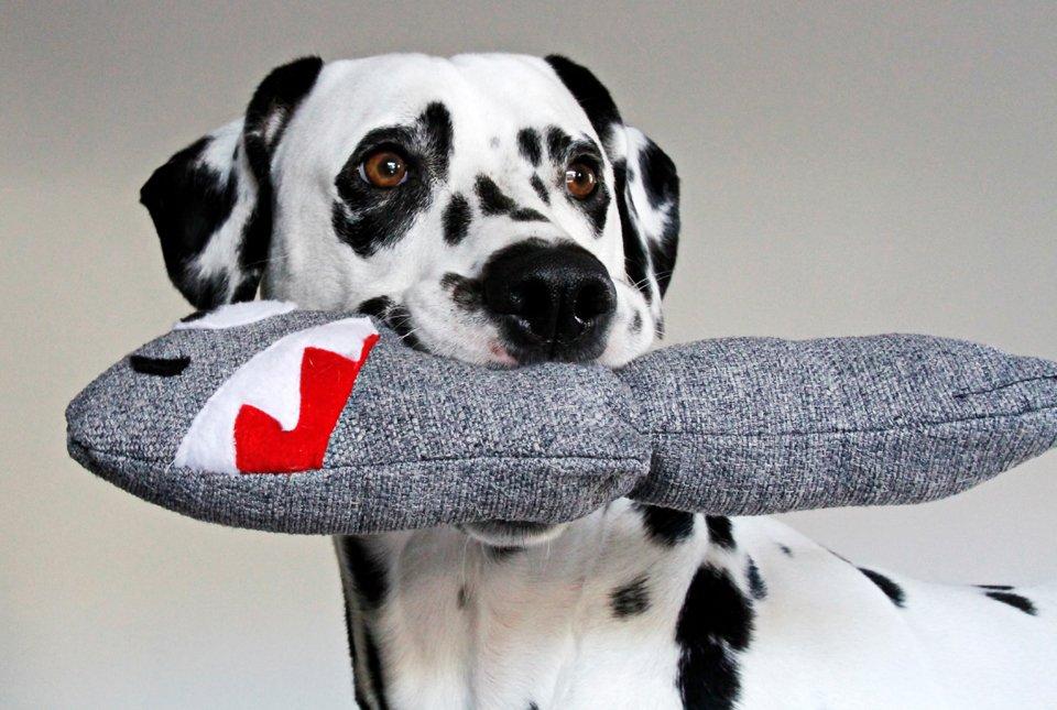Dalmatian dog with a homemade stuffed shark toy