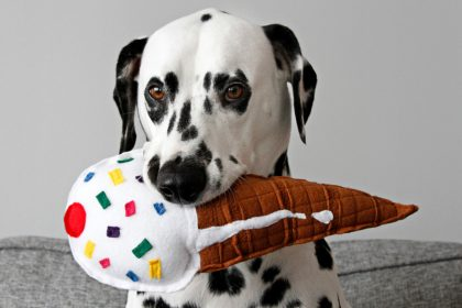 DIY squeaky stuffed ice cream cone dog toy