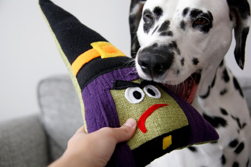 DIY Halloween witch dog toy