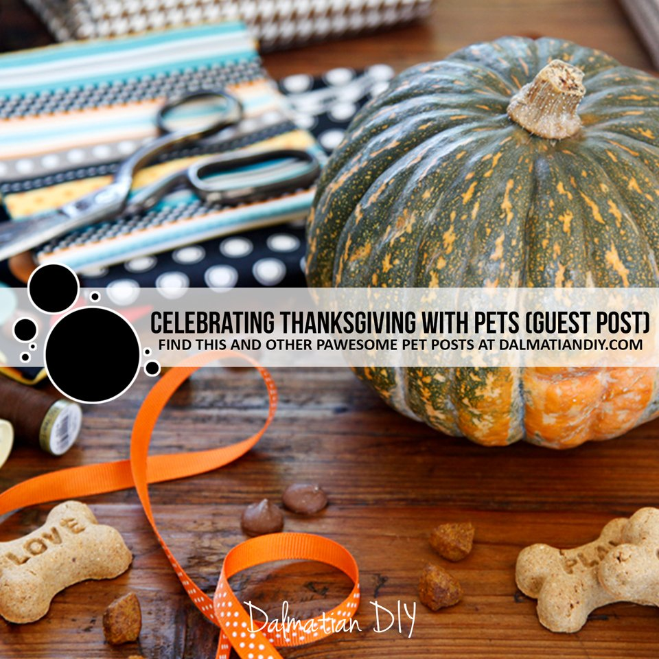 Tips for celebrating the Thanksgiving holidays with pets