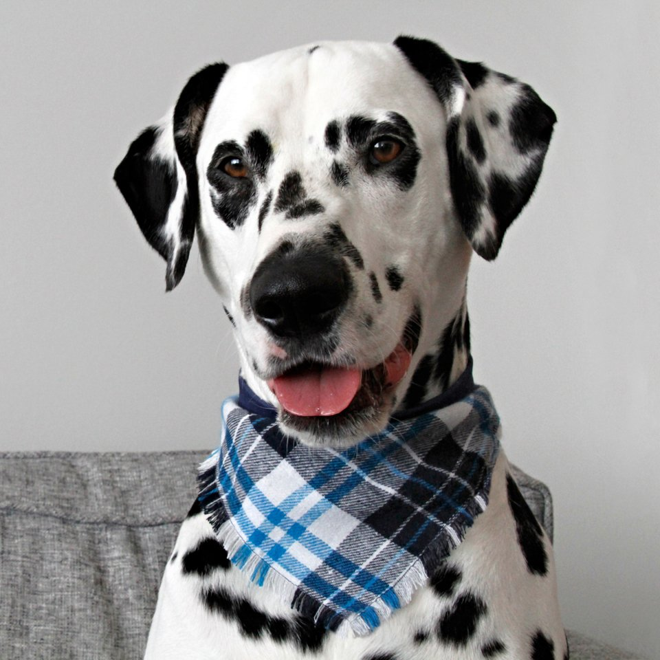 DIY fringed flannel dog bandana