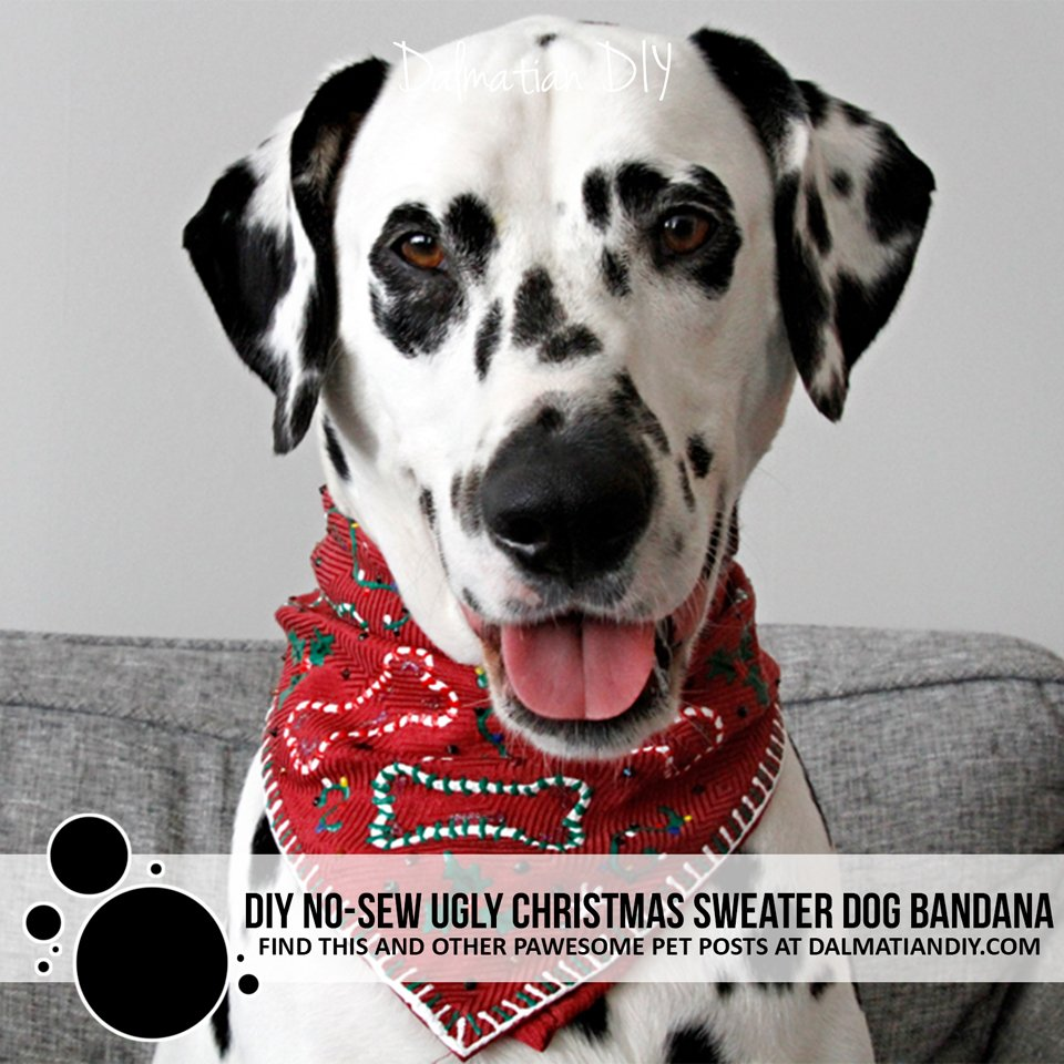 DIY no sew ugly Christmas sweater dog bandana