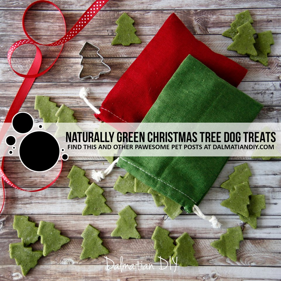 Recipe for naturally green Christmas tree dog treats