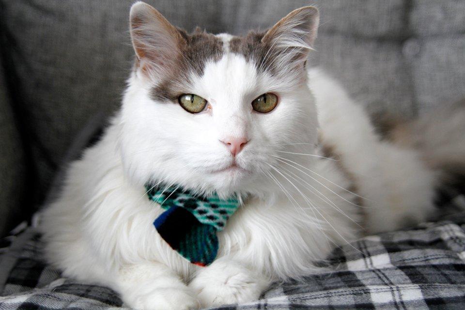 Cat wearing a homemade plaid fleece scarf